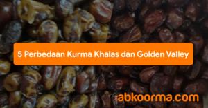 5 Perbedaan Kurma Khalas dan Golden Valley